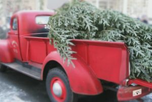 tree-delivery
